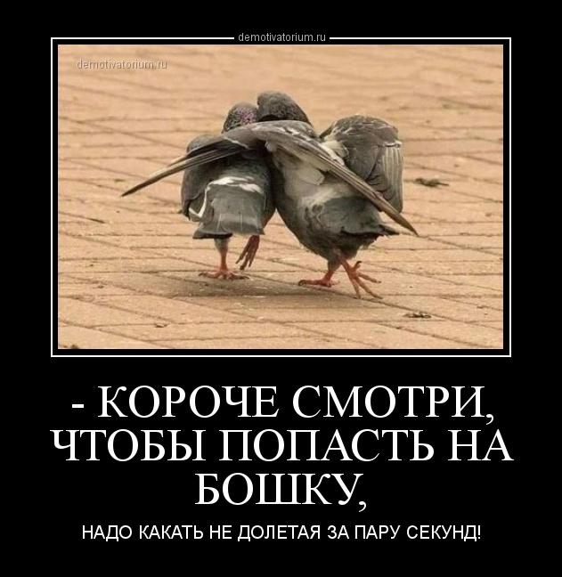 demotivatorium_ru__koroche_smotri_chtobi_popast__na_boshku_160561.jpg