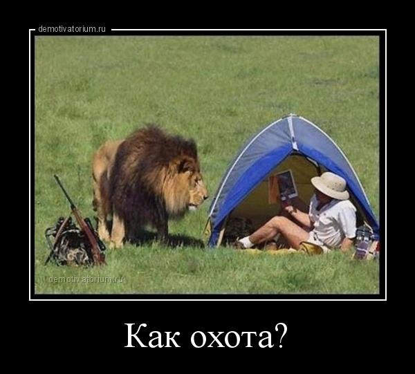 demotivatorium_ru_kak_ohota_116998.jpg