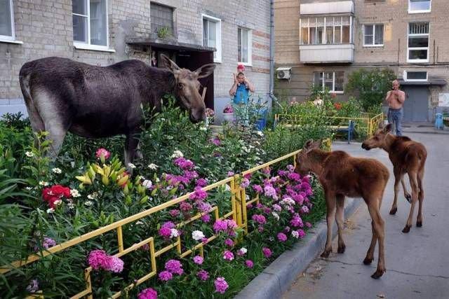fotopodborka_pjatnicy_90_foto_6.jpg