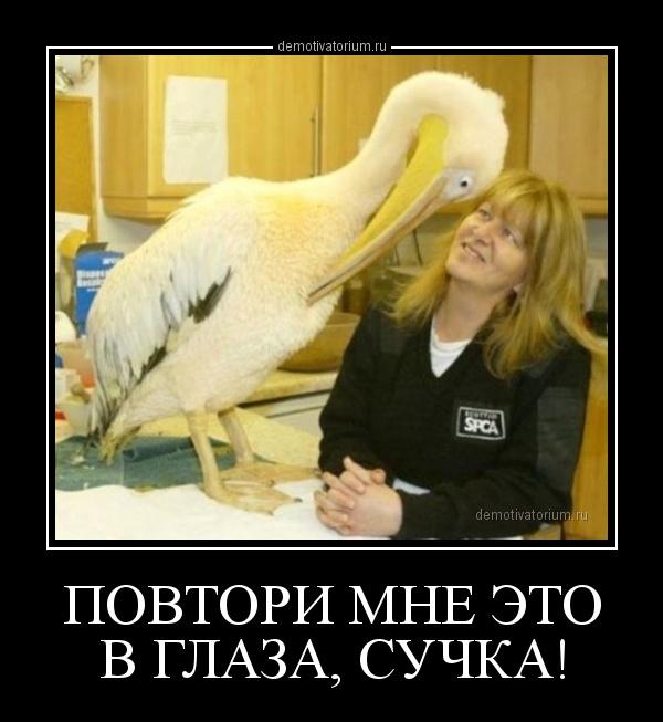 demotivatorium_ru_povtori_mne_eto_v_glaza_suchka_160819.jpg