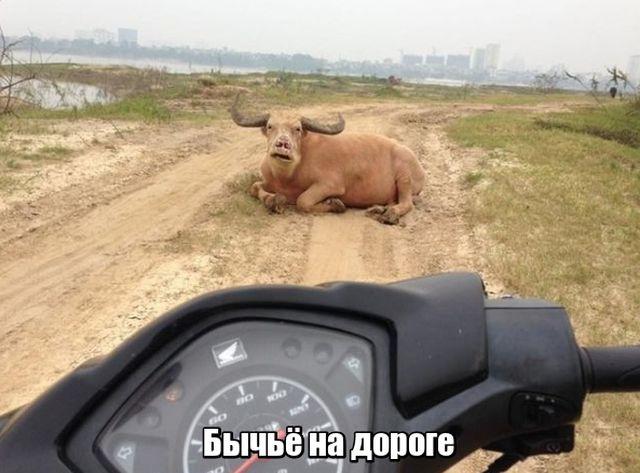1530909566_prikoly-6.jpg