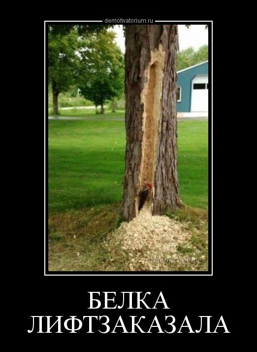demotivatorium_ru_belka_liftzakazala_161078.jpg