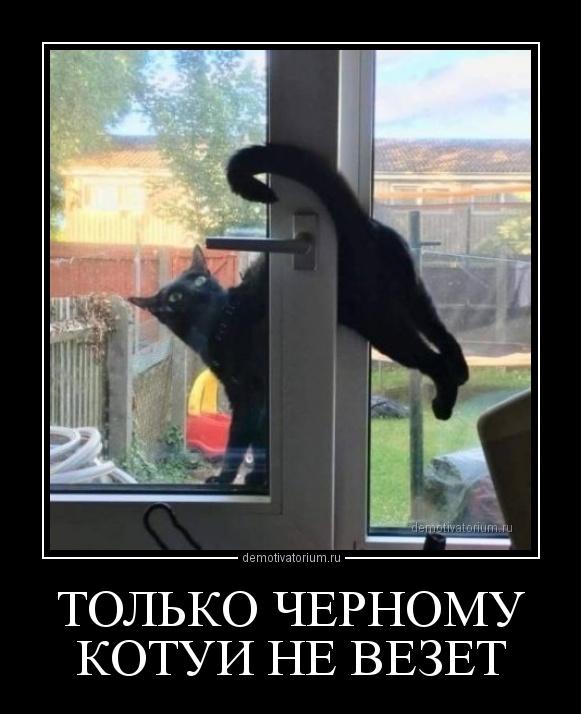 demotivatorium_ru_tol_ko_chernomu_kotui_ne_vezet_160695.jpg
