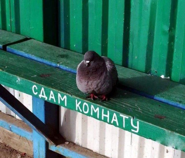 fotografii_s_rossijjskikh_prostorov_31_foto_12.jpg