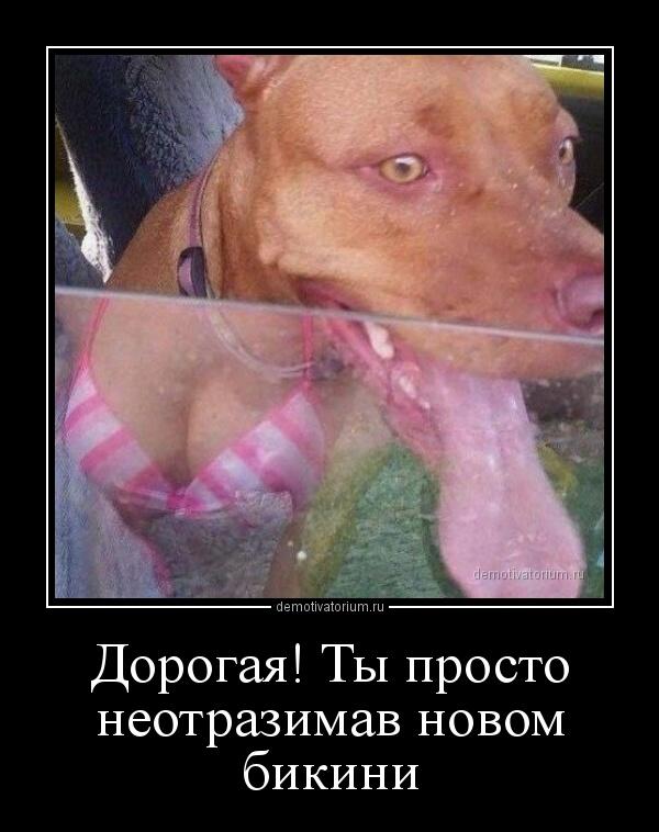 demotivatorium_ru_dorogaja_ti_prosto_neotrazimav_novom_bikini_161340.jpg