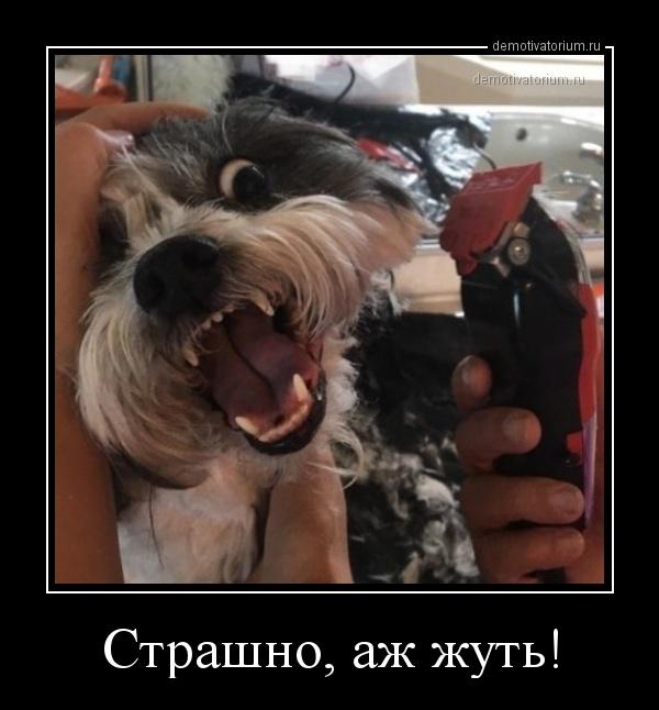 demotivatorium_ru_strashno_aj_jut_161289.jpg