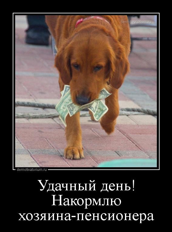 demotivatorium_ru_udachnij_den_nakormlu_hozjainapensionera_161548.jpg