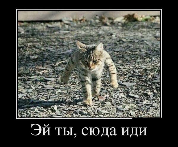 5_neEBdsiXk.jpg