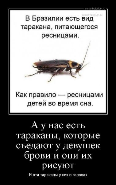 da_u_nas_est_tarakani_kotorie_sedaut_u_devushek_brovi_i_oni_ih_risuut_162088.jpg