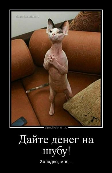 ddajte_deneg_na_shubu_161987.jpg