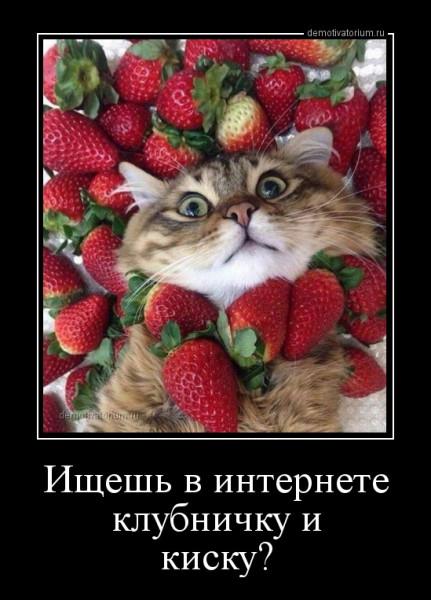 dishesh_v_internete_klubnichku_i_kisku_162115.jpg
