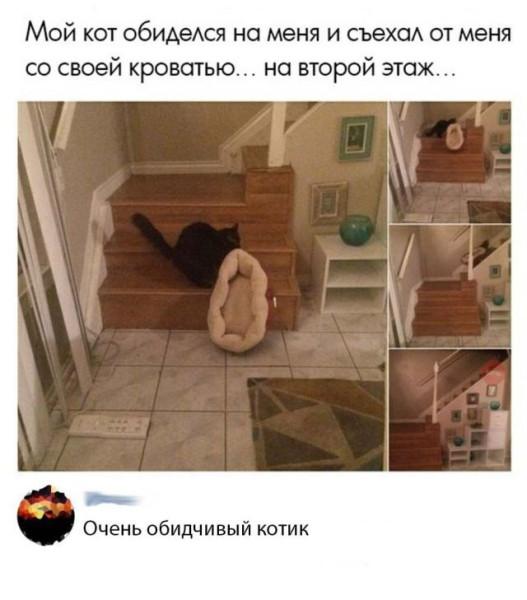 fotopodborka_vtornika_59_foto_10.jpg