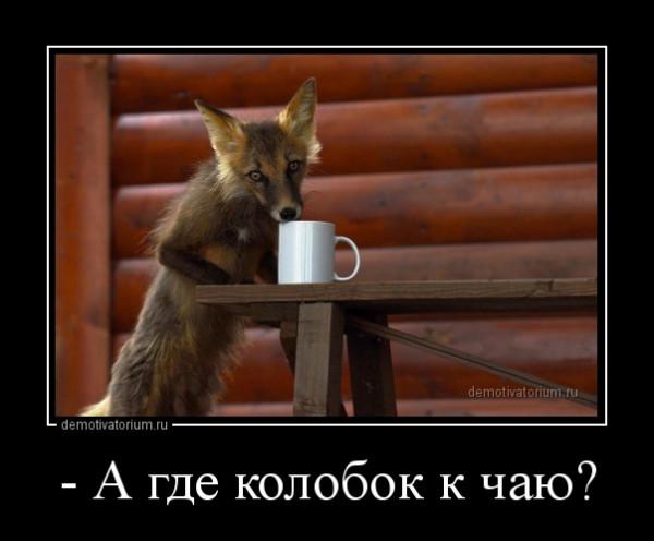 _a_gde_kolobok_k_chau_162692.jpg