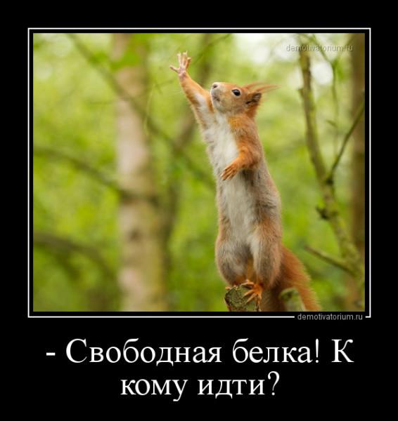 _svobodnaja_belka_k_komu_idti_162181.jpg