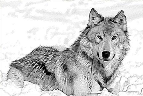 wolfy-4