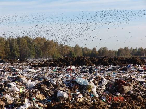 мусорный полигон.jpg