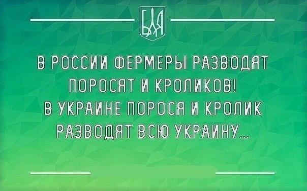 3031318_6cee9bd23fdb383c0806e4f4030879c0