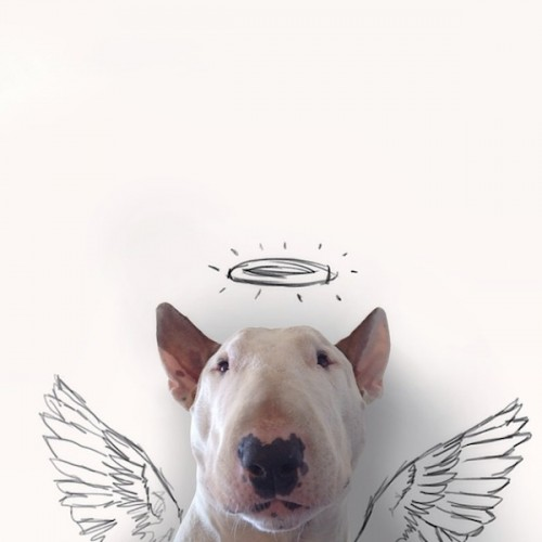 Rafael_Mantesso_Creates_Playfull_Illustrations_Around_His_Bull_Terrier_2014_03-500x500