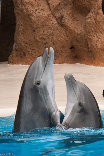 two-dolphins
