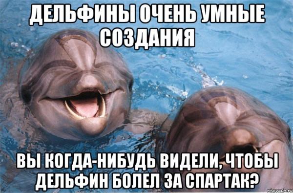 delfiny_55915975_big_