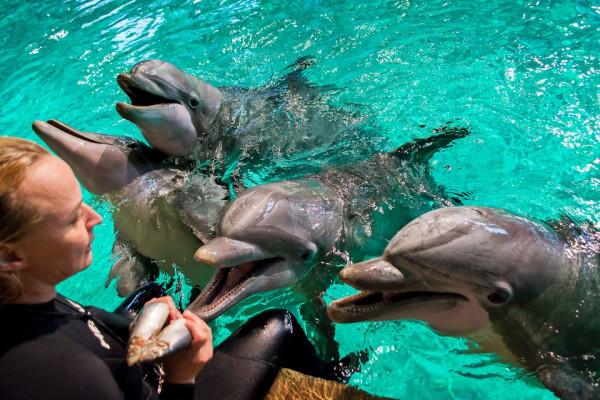Delfinaario-Särkänniemi-kaikki-delfiinit-ohjaaja-kalat