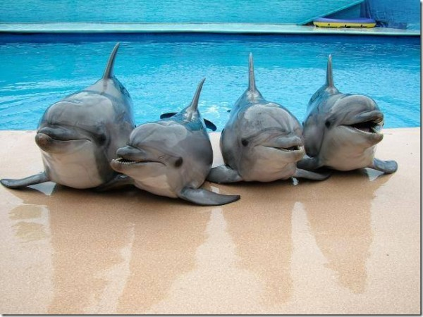 4-dolphins