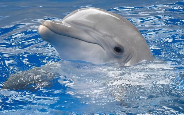 nice-dolphin