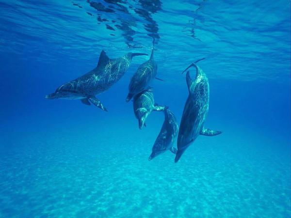 Дельфины-3