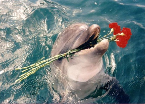 dolphin-flowers