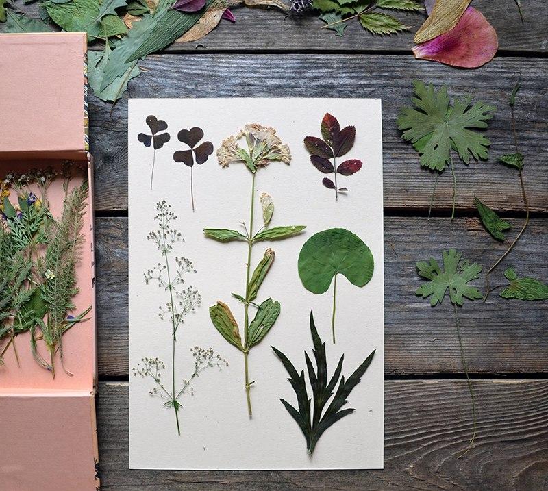 Открытки гербарий