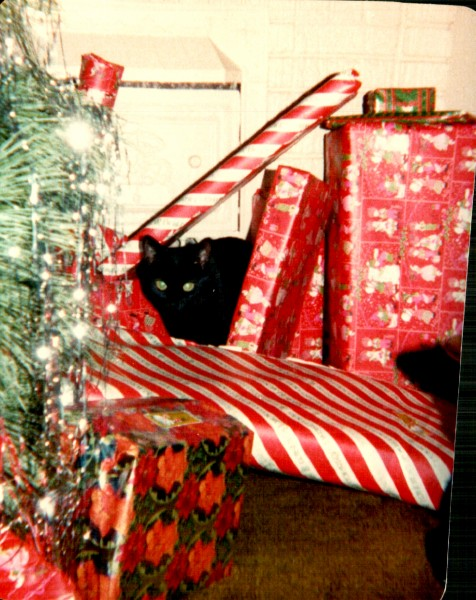 Isis at Christmas Chidester house