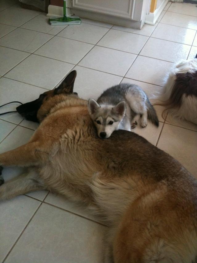 Cuddle Teimz!