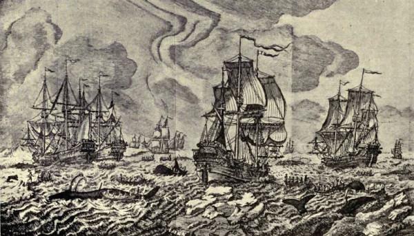 Китобойный промысел в северных морях в начале XVIII ст.
