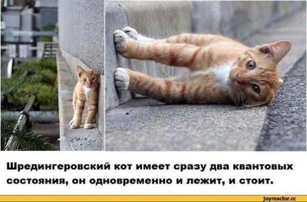 кот-шрёдингера-котёнок-живность-песочница-928472