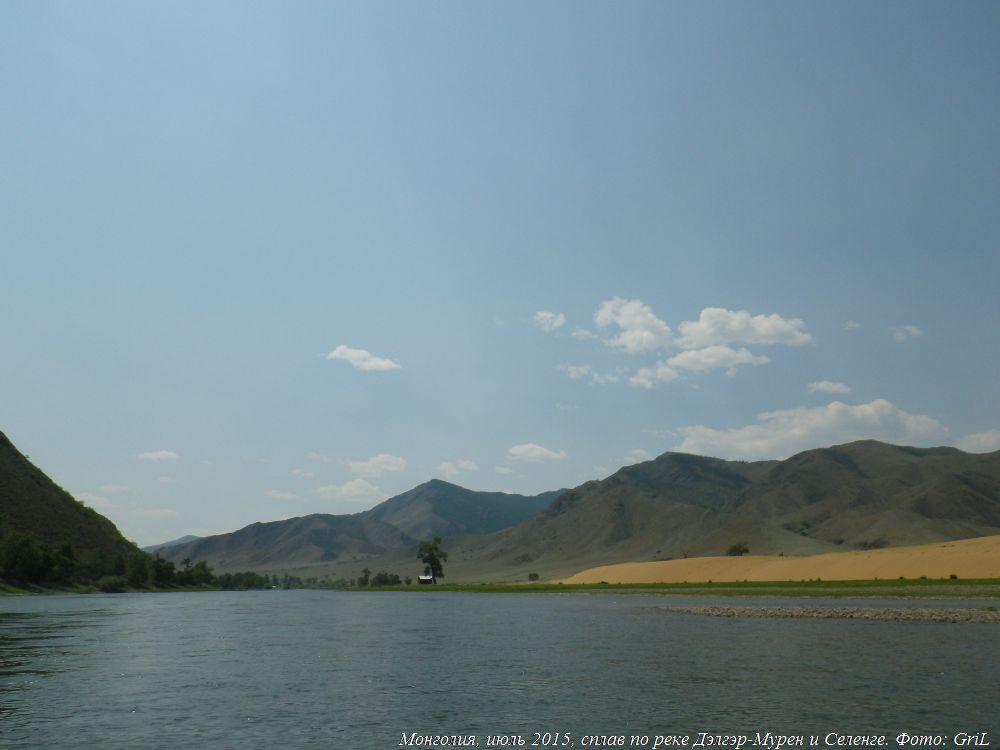 ивы в реке фото