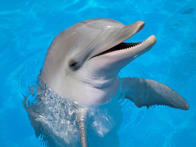 Шотландские ученые доказали, что дельфины общаются при помощи