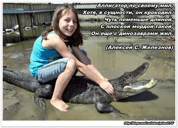 А-алигатор