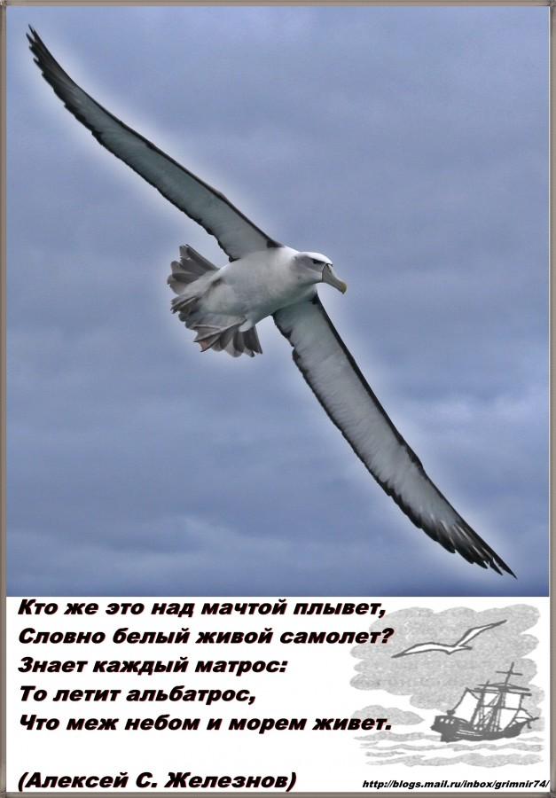 А-альбатрос