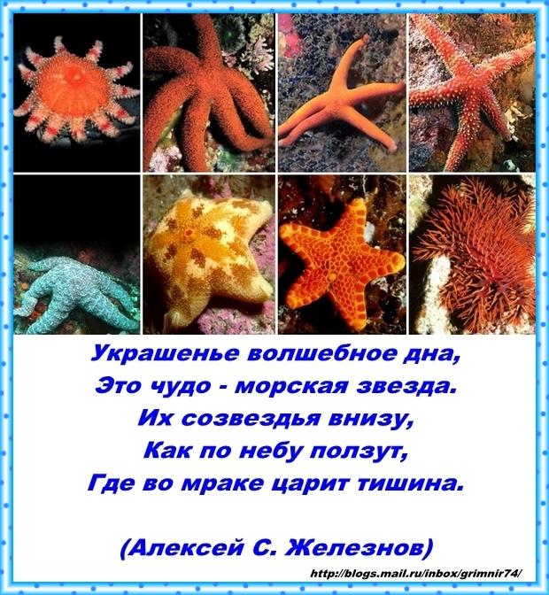 З-звезда морская