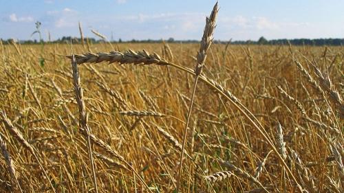 Израильские ученые нашли новое решение проблемы голода