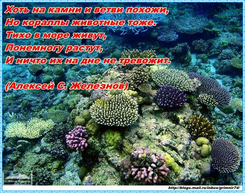 К-кораллы