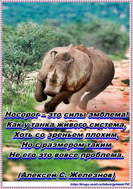 Н-носорог