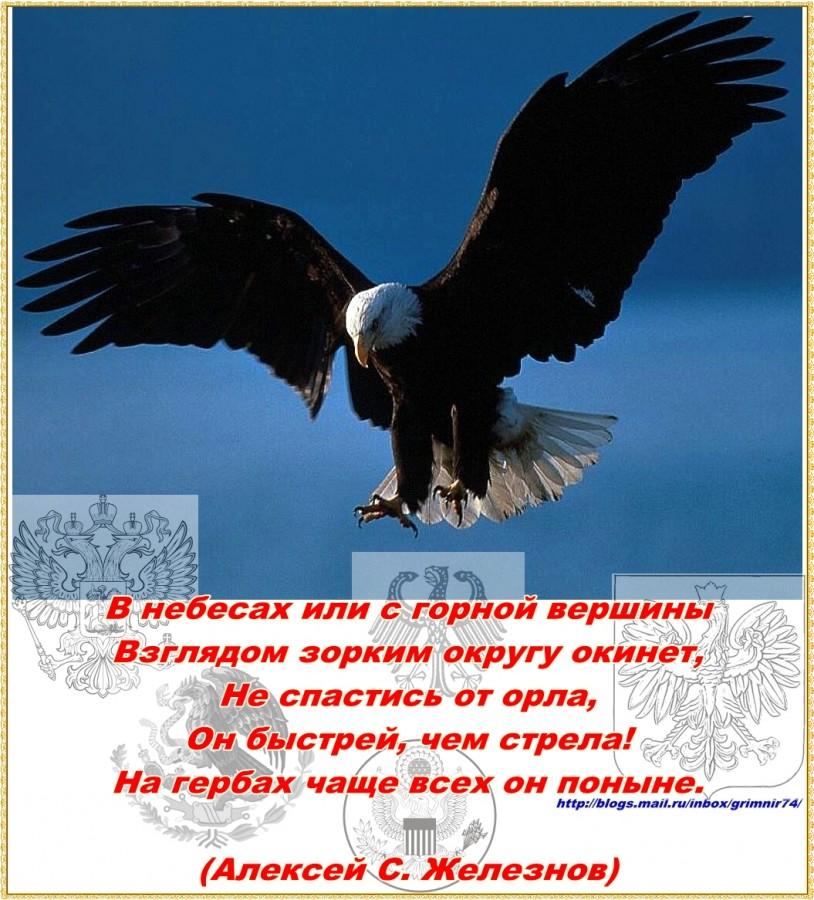 О-орел