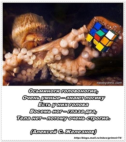 О-осьминог