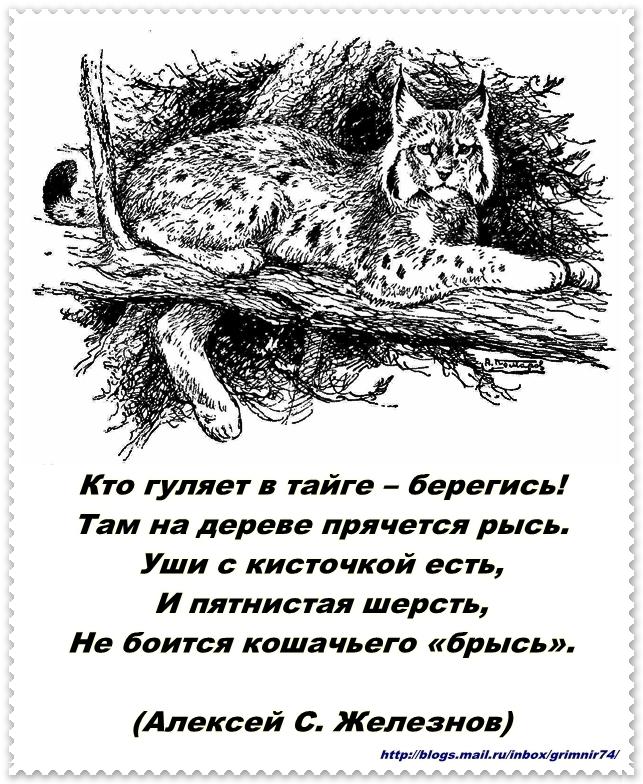 Р-рысь