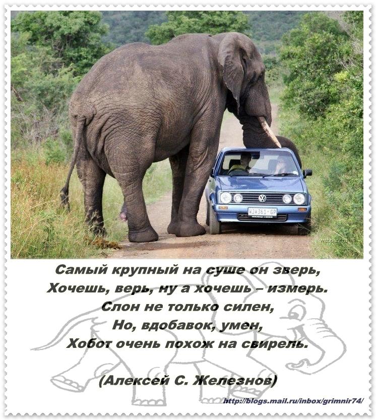 С-слон