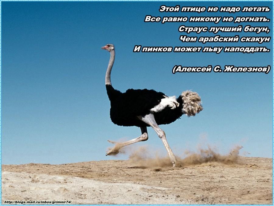 С-страус