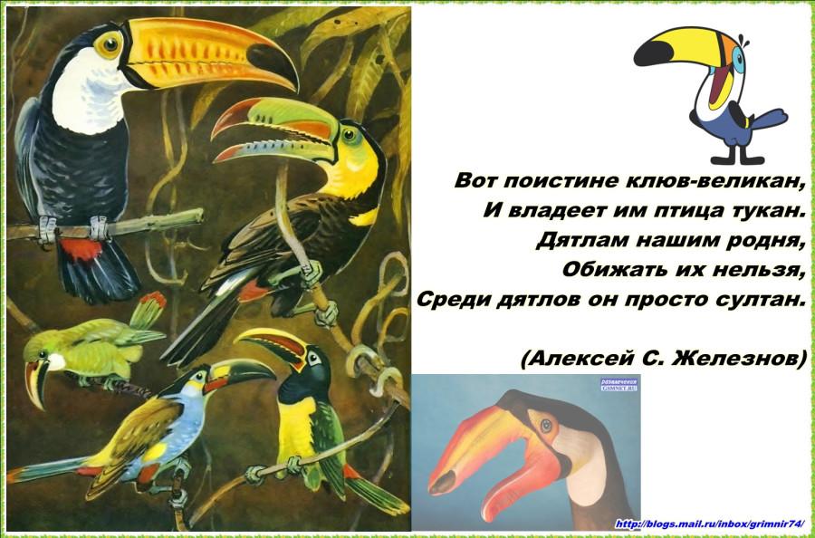 Т-тукан