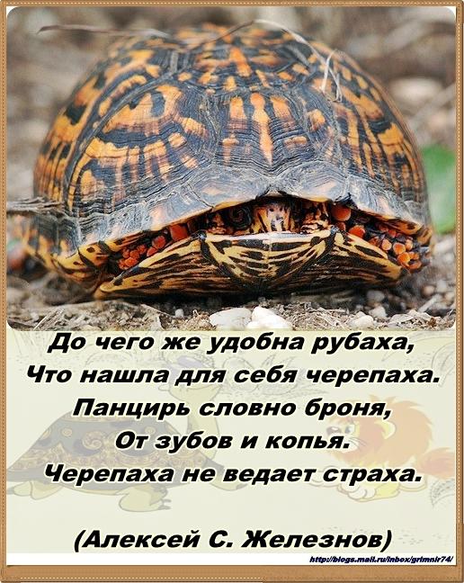 Ч-черепаха