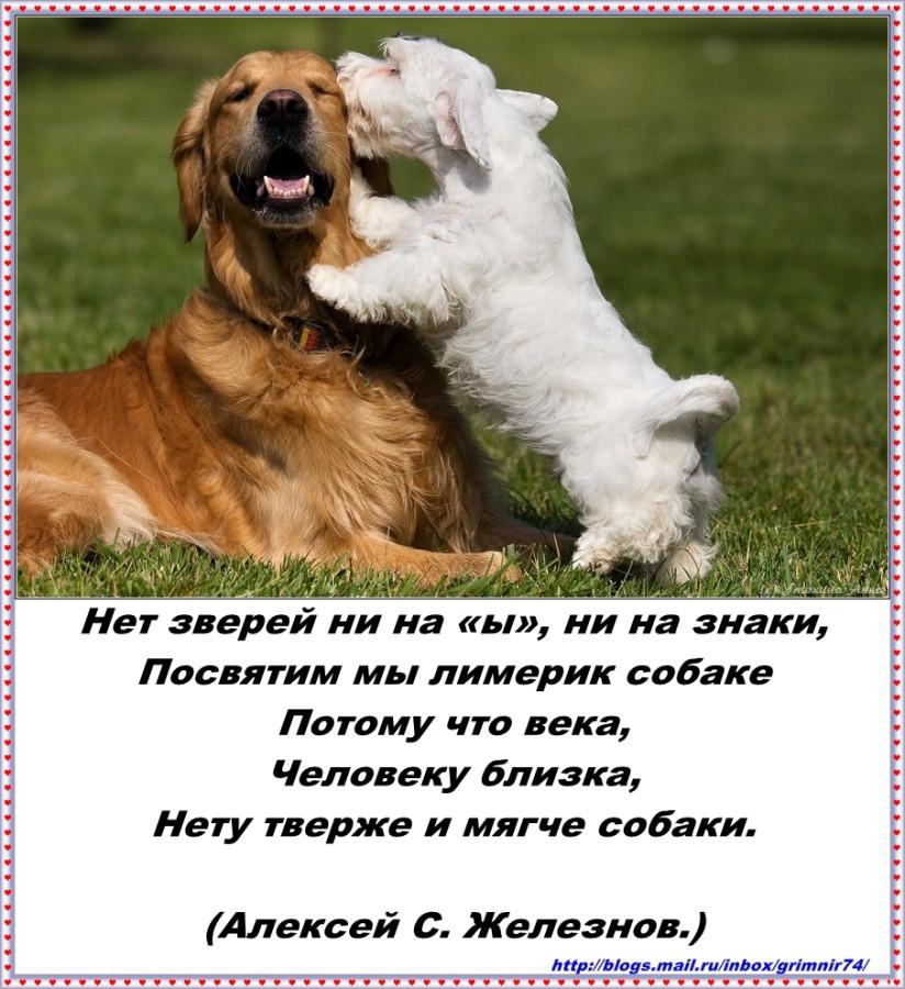 ЪЬЫ -собака